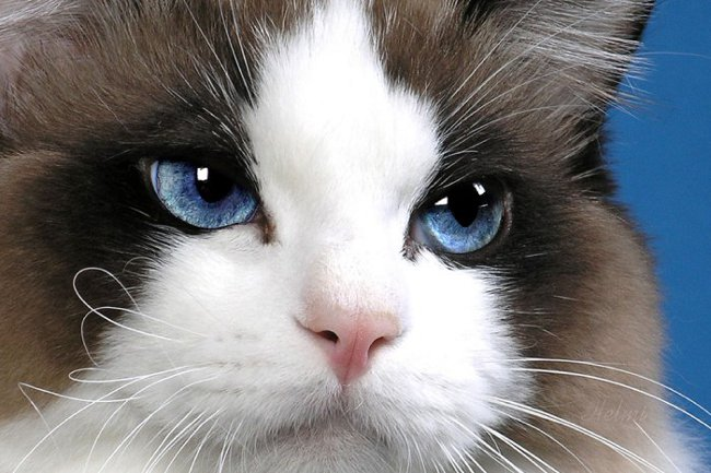 Les yeux d'un chat creep: que faire